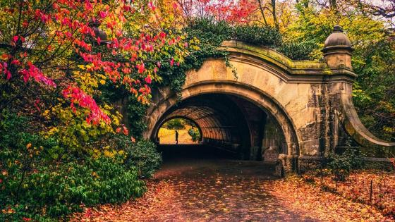 Autumn Prospect Park Passage - Brooklyn wallpaper