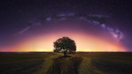 Lone tree under the Milky Way wallpaper