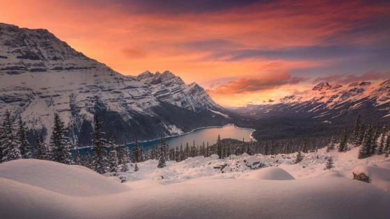 Peyto Lake - Banff National Park wallpaper