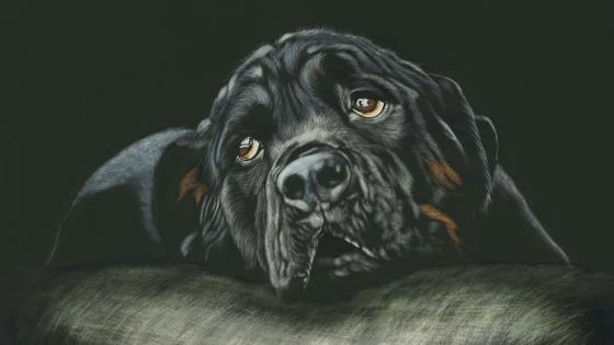 Black Rottweiler - Painting art wallpaper