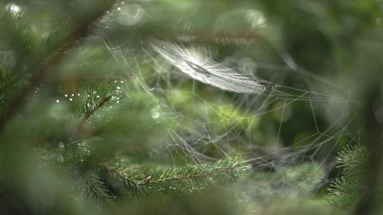 Spider silk - Macro photography wallpaper