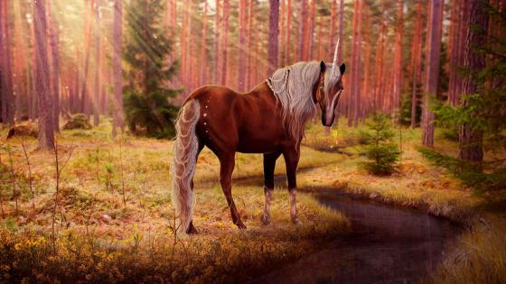 Unicorn in the forest creek wallpaper