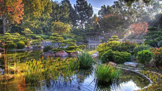 Earl Burns Miller Japanese Garden wallpaper