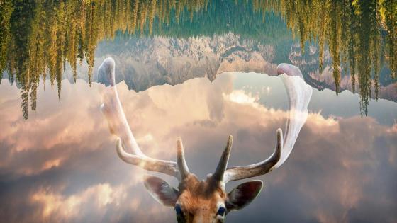 Inverted image wallpaper