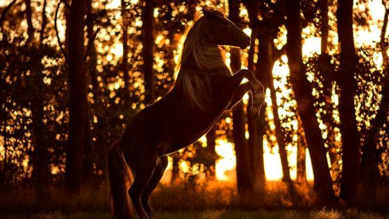 Horse in the forest sunlight wallpaper