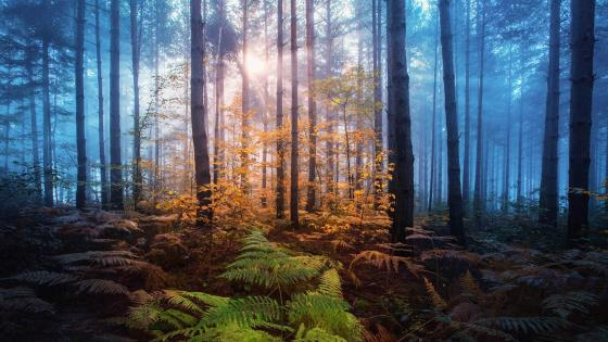 Sun rays in the dark forest wallpaper