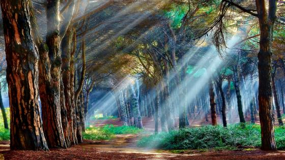 Mystical forest wallpaper