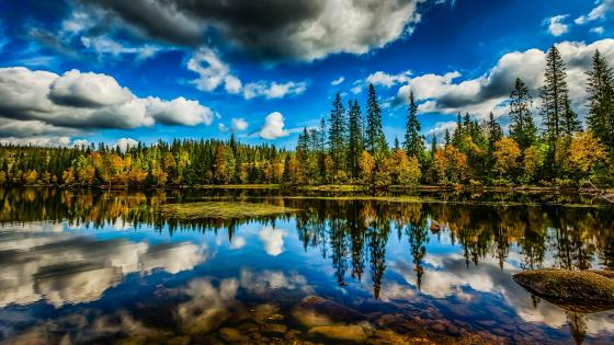 Autumn forest reflection wallpaper