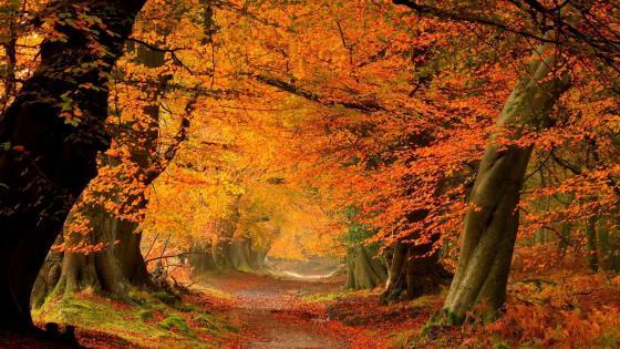 Autumn leaf color wallpaper