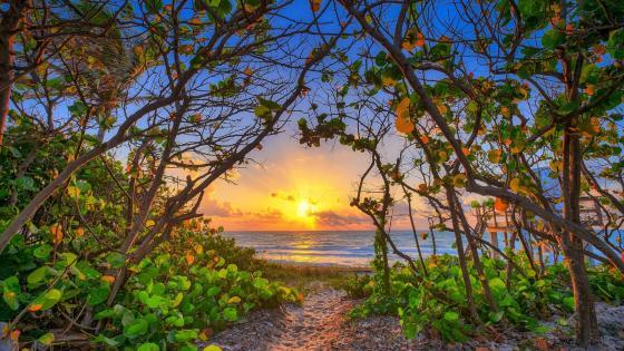 Carlin Park autumn sunrise (Jupiter, Florida) wallpaper
