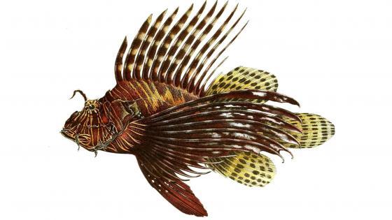 Red lionfish illustration wallpaper