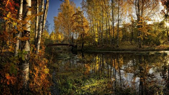 Scenic autumn reflection wallpaper