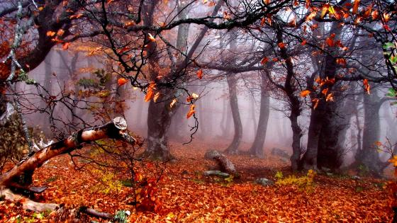 Trees in autumn wallpaper