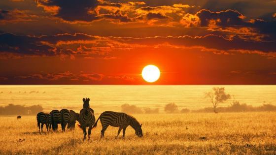 Arusha Safari at sunrise wallpaper