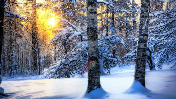 Snowy forest landscape wallpaper
