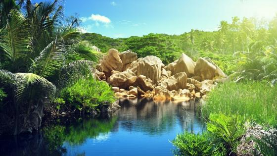 Lake in the jungle (La Digue, Seychelles) wallpaper