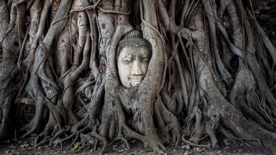 The famous Buddha tree (Ayutthaya Historical Park, Thailand) wallpaper