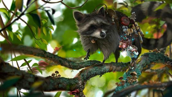 Funny Raccoon - Fantasy art wallpaper