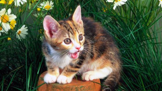 Funny kitten in grass wallpaper