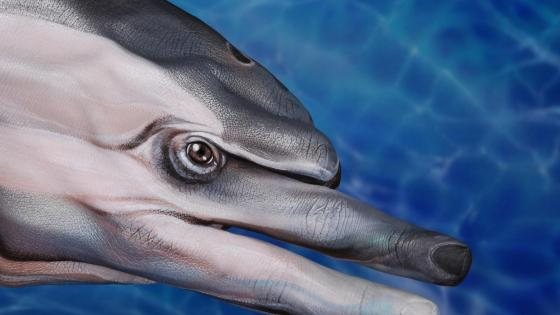 Dolphin finger painting wallpaper