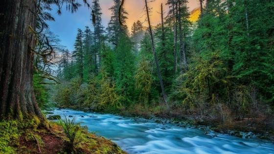 Skykomish River (Washington) wallpaper
