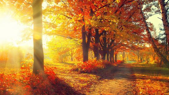 Autumn leaf color wallpaper