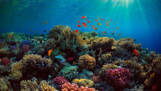 Amazing coral reef wallpaper