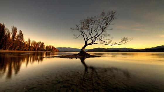 Lake Wanaka lone tree wallpaper