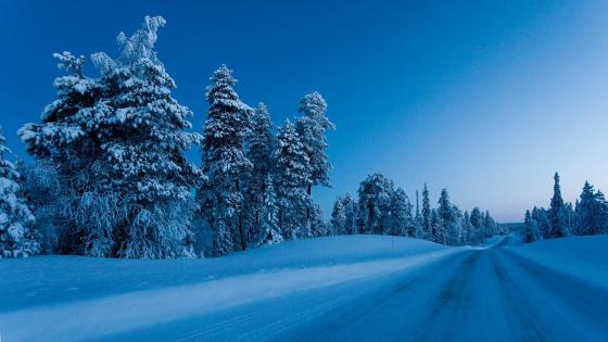 Snowy road in the forest (Finland) wallpaper