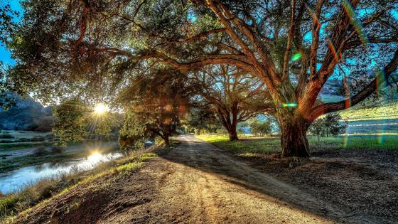 Pathway at Malibu Creek State Park wallpaper