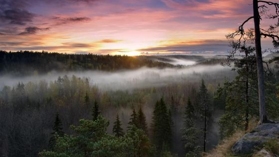 Nuuksio National Park wallpaper
