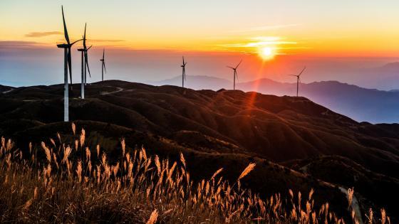 Wind farm sunrise wallpaper