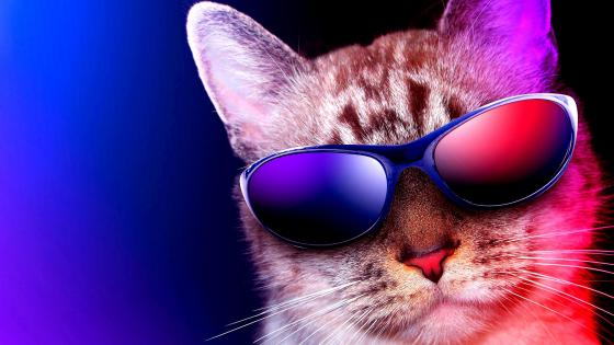 Cool Cat in sunglass wallpaper