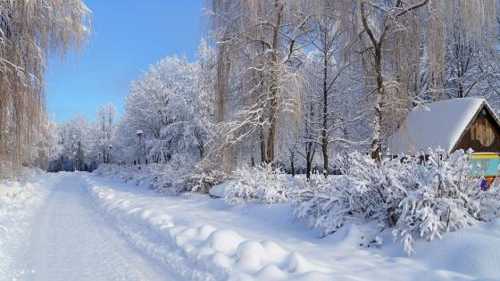 Winter in Russia wallpaper