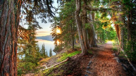 Path around Crater Lake wallpaper