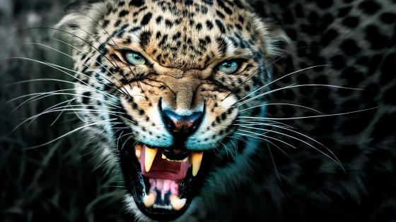 Raring Leopard wallpaper