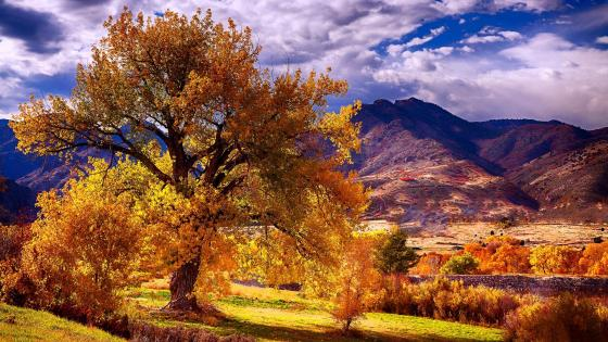 Colorado Autumn Scenery wallpaper
