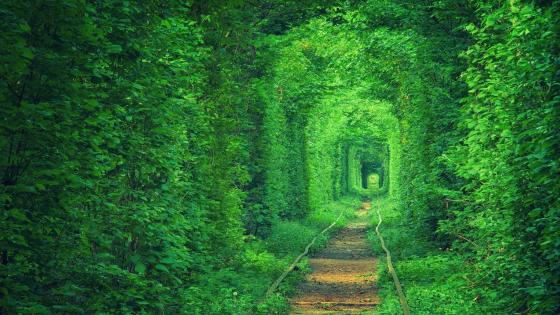 Tunnel of Love (Tunel Kokhannya) wallpaper