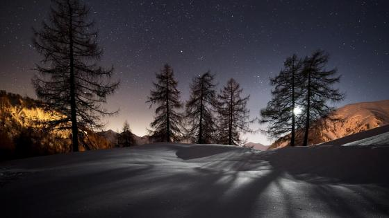 Pine shadows in the snow at night wallpaper