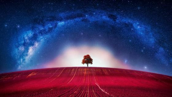 Lonely red tree wallpaper