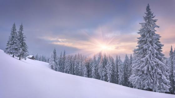 Beautiful winter landscape wallpaper