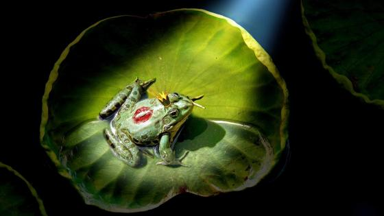 Frog Prince wallpaper