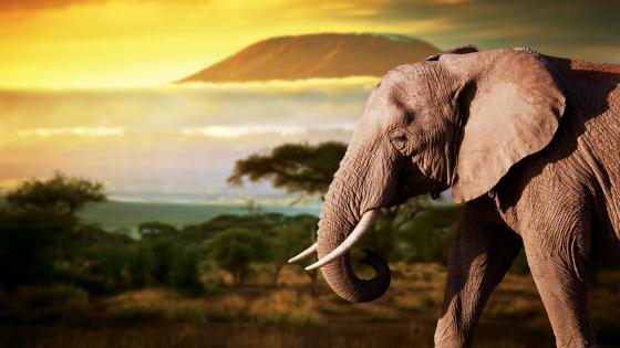 Beautiful Elephant wallpaper