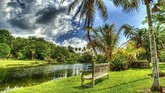 Bench under the palms wallpaper
