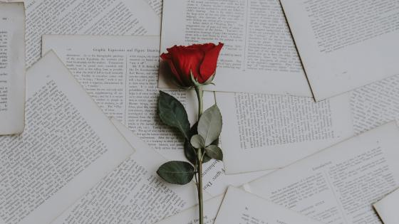 Red rose on book pages wallpaper