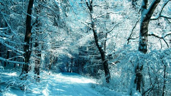 Snowy forest road wallpaper