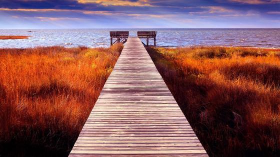 Walk to the sea wallpaper
