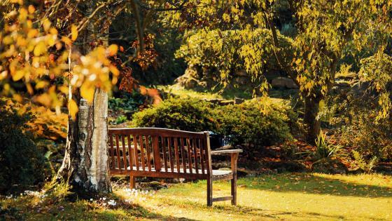 Bench in the garden wallpaper