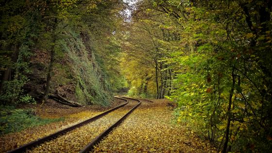 Forest train track wallpaper