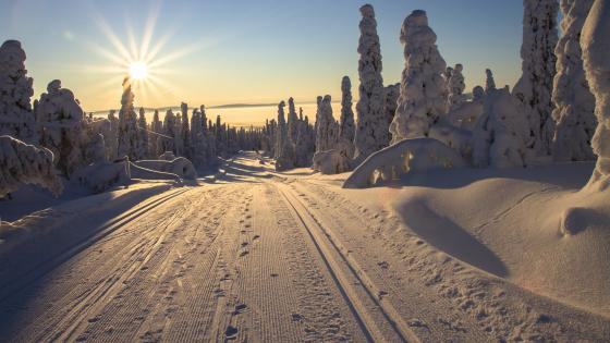 Lapland winter wonderland wallpaper